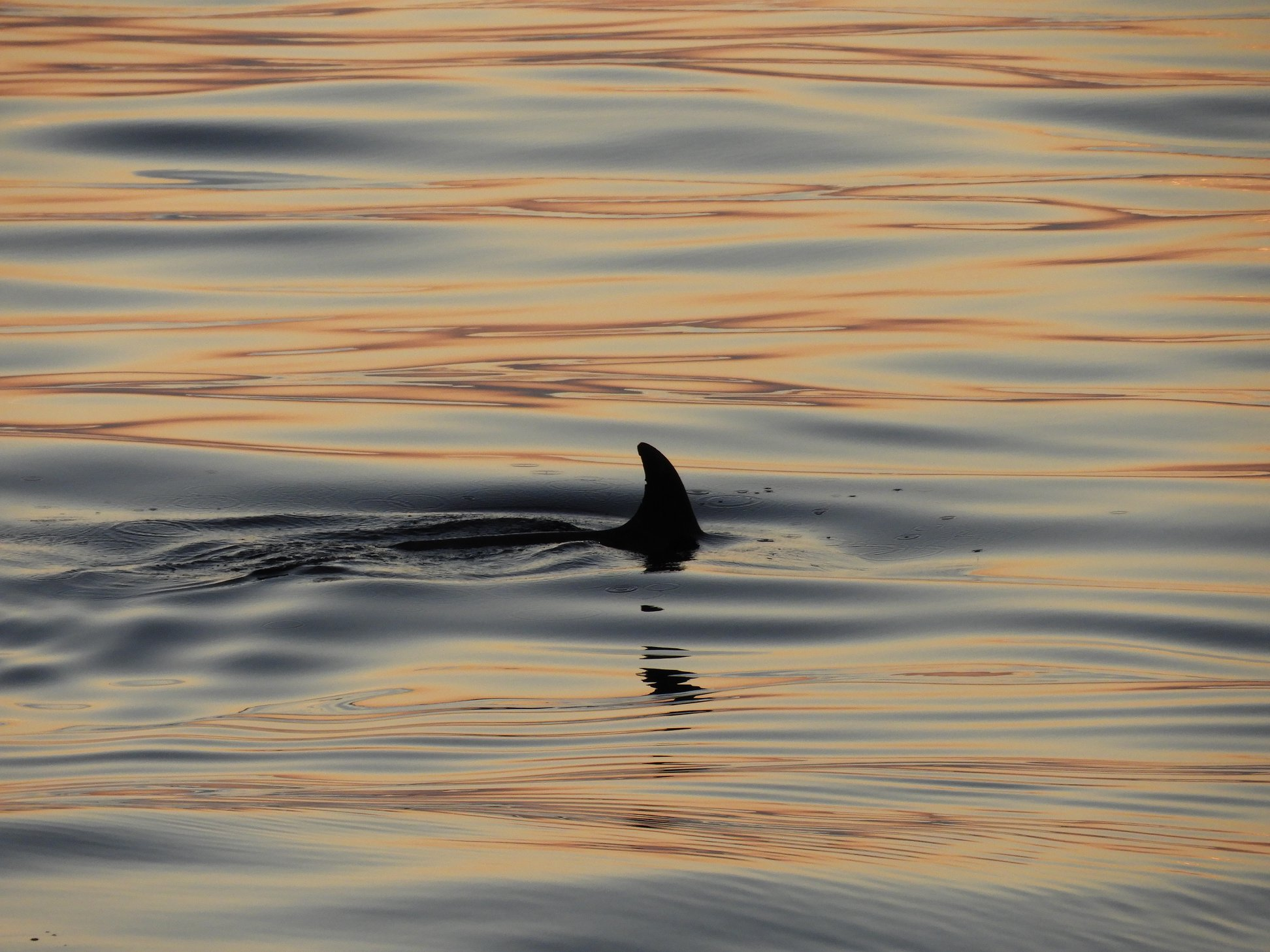 National Park Brijuni Dolphins