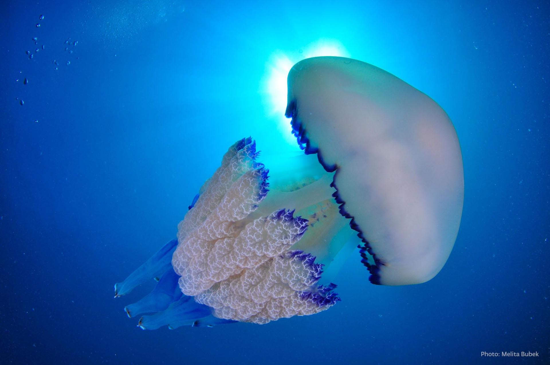 National Park Brijuni Submarine